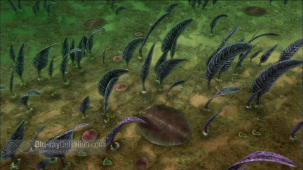 Nova-Australias-First-4-Billion-Years-BD_10